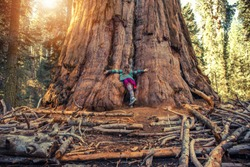 Hugging Giant Sequoia Redwood by Teenage Caucasian Girl. Exploring Giant Forest in California Sierra Nevada Mountains. Sequoia National Park. United States of America.