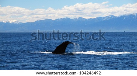 hugh sperm whale on his way