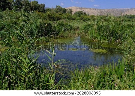 Hula Marsh, a shallow wetland at the edge of Hula Lake, Hula Nature Reserve, a site of worldwide importance, Hula Valley, Upper Galilee, Israel.