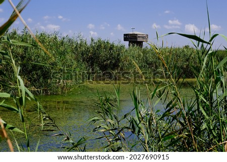 Hula Marsh and observation tower in the background, a shallow wetland at the edge of Hula Lake, Hula Nature Reserve, a site of worldwide importance, Hula Valley, Upper Galilee, Israel.