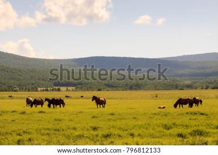 Hulunbuir Grasslands near Enhe, China #796812133