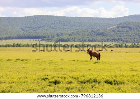 Hulunbuir Grasslands near Enhe, China #796812136
