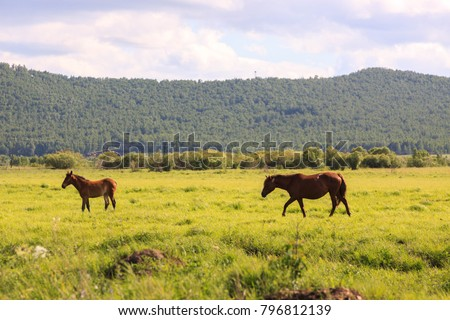 Hulunbuir Grasslands near Enhe, China #796812139