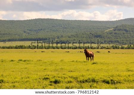 Hulunbuir Grasslands near Enhe, China #796812142