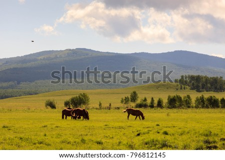 Hulunbuir Grasslands near Enhe, China #796812145