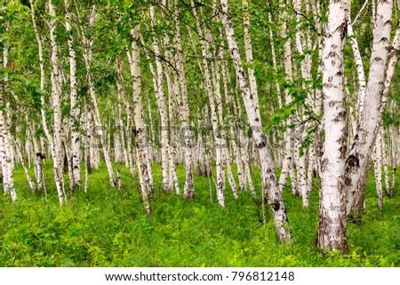 Hulunbuir Grasslands near Enhe, China #796812148