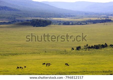 Hulunbuir Grasslands near Enhe, China #796812157