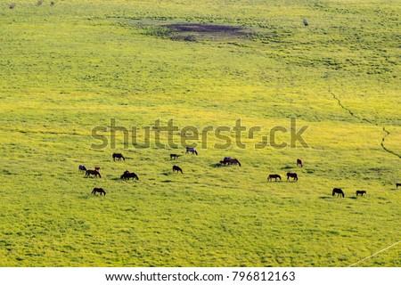 Hulunbuir Grasslands near Enhe, China  #796812163