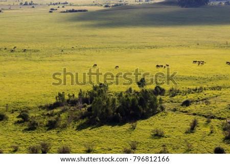 Hulunbuir Grasslands near Enhe, China #796812166