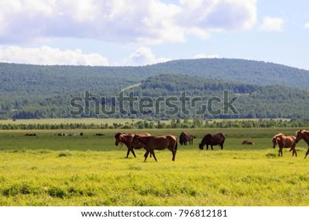 Hulunbuir Grasslands near Enhe, China #796812181
