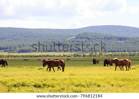 Hulunbuir Grasslands near Enhe, China #796812184