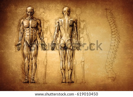 human anatomy drawing, old, canvas; 3d illustration Stockfoto ©