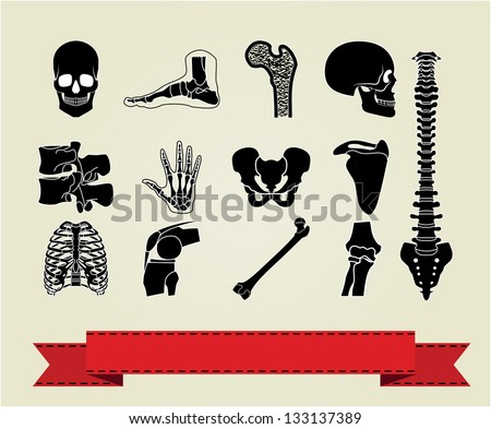 Human anatomy icons parts. Vector version also available in my portfolio.