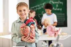 Human anatomy. Positive nice boy smiling to you while holding a heart model