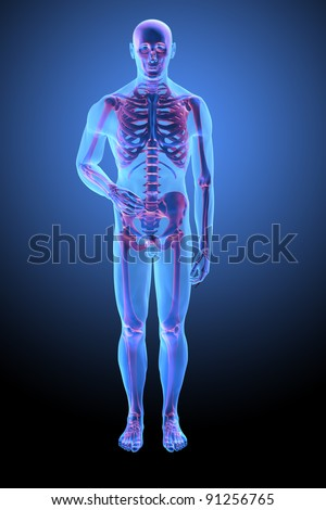 Human anatomy with visible skelton - medical illustration