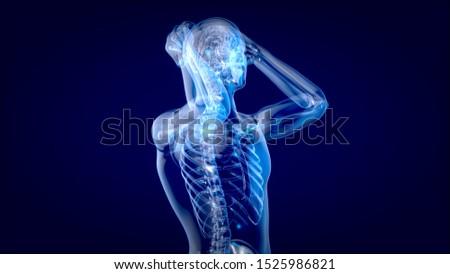 Human and brain xray, human anatomy, 3D Illustration