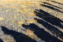 Human and people shadows on the land, sunlight and shadows. Crowd people shadows.