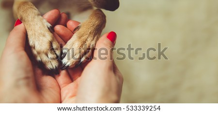 Human and the animal connection. The concept of trust and friendship.