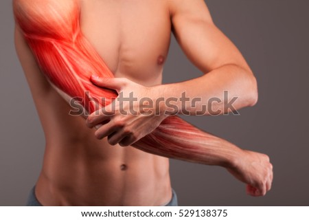 Human arm musculature. Anatomy of human arm.