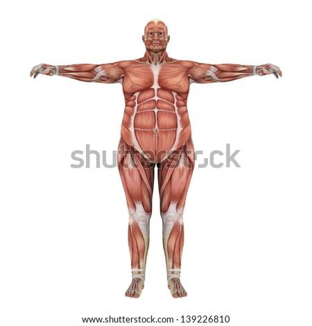 human body  - stock photo