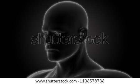 Human Body Anatomy. 3D #1106578736