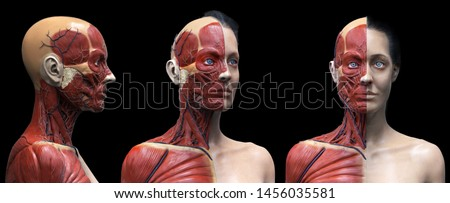 Human body anatomy muscles structure of a female, front view side view and perspective view, 3d render Foto stock ©
