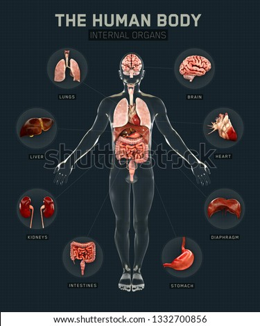 Human body and organs systems. Infographic anatomy system. 3d rendering