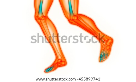 Human Body Bone Joint Pains (Foot joints and Bones). 3D | EZ Canvas