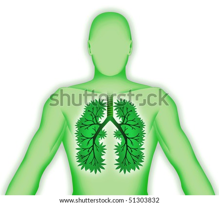 Human body three-dimensional lung tree on white