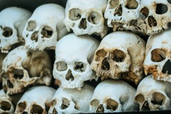Human bones and skulls. Row of skulls. Skulls collection in catacombs. Symbol of death, fear and evil