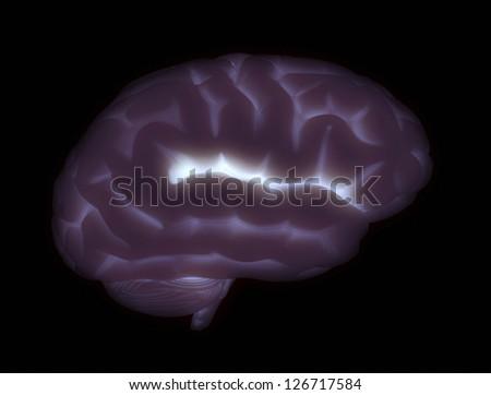 Human brain