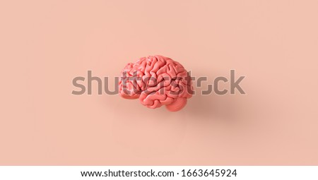 Human brain Anatomical Model, medical concept image