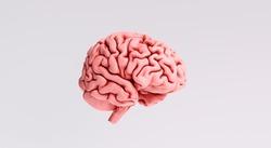 Human brain Anatomical Model, side view