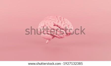 Human brain Anatomical Model slide on pink background. 3d rendering.