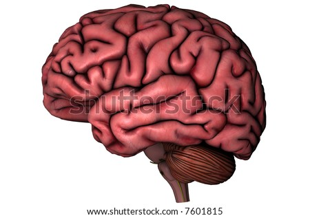Human brain and spine lateral anatomical view 3D graphic on white background