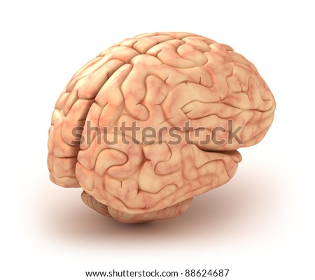Make 3D Brain Model http://www.shutterstock.com/pic-88624687/stock-photo-human-brain-d-model-isolated.html