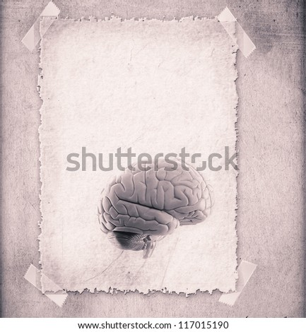 Human brain - illustration in frame