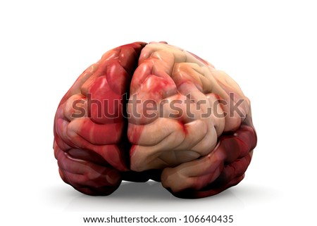 Human Brain Isolated