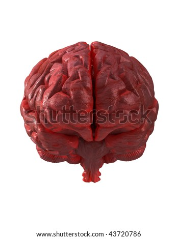 Human brain isolated with clipping path