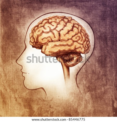 human brain medical schematic simplified illustration (painting)