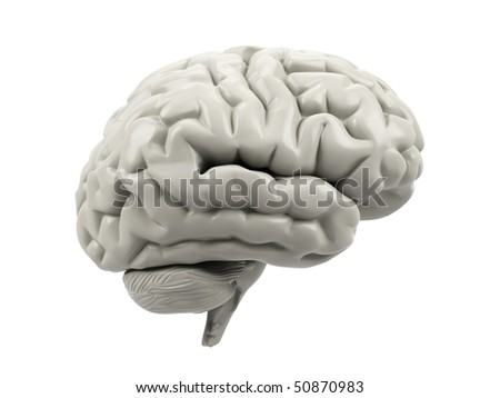 Human brain on a white background.