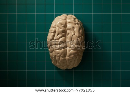 Human brain on science operating room table