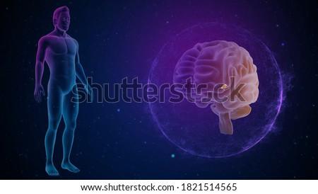 Human brain Pineal Gland 3d illustration Stock photo ©