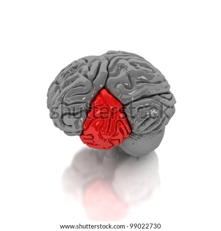 Human brain. Red part
