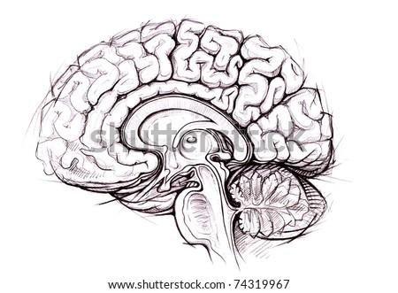 human brain sagittal view medical sketchy illustration