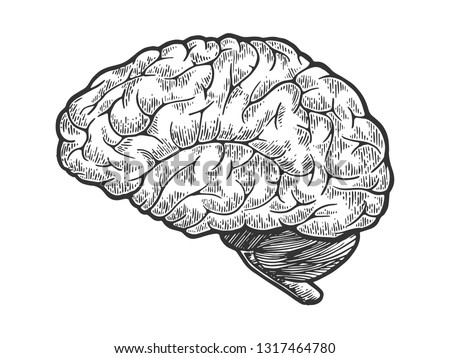 Human brain schematic vintage sketch engraving raster illustration. Scratch board style imitation. Black and white hand drawn image.