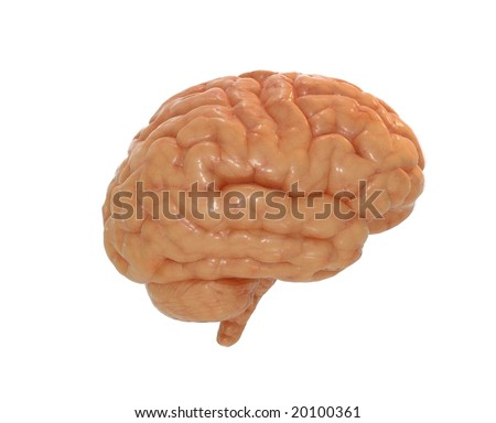 Human brain with alpha mask