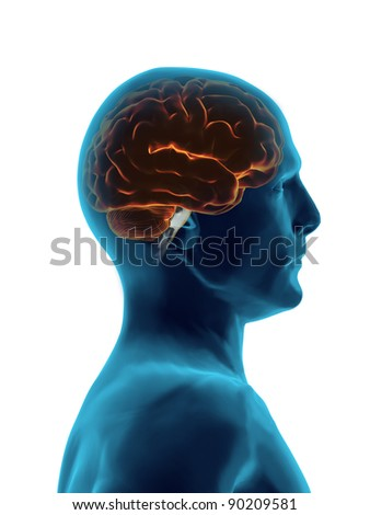 Human Brain Xray - stock photo