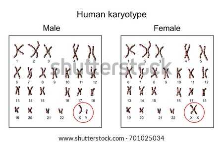Human chromosomes. Male and female karyotype, 3D illustration