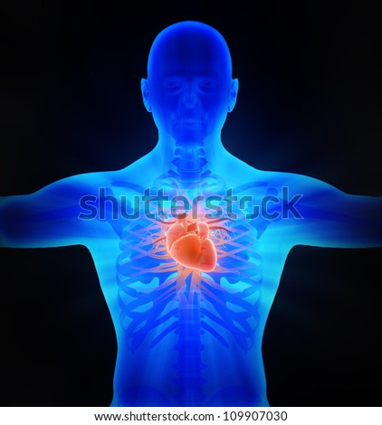 Human circulatory system - medical illustration - stock photo